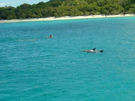 Dolphing__1024x768___450x338_