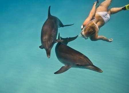 dolphin_rf__583x419___450x323_